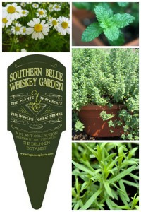 Grow Your Own: The Southern Belle Whiskey Garden | The Drunken ...