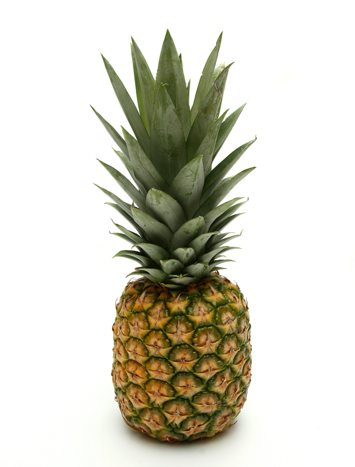 [Image: pineapple.jpg]